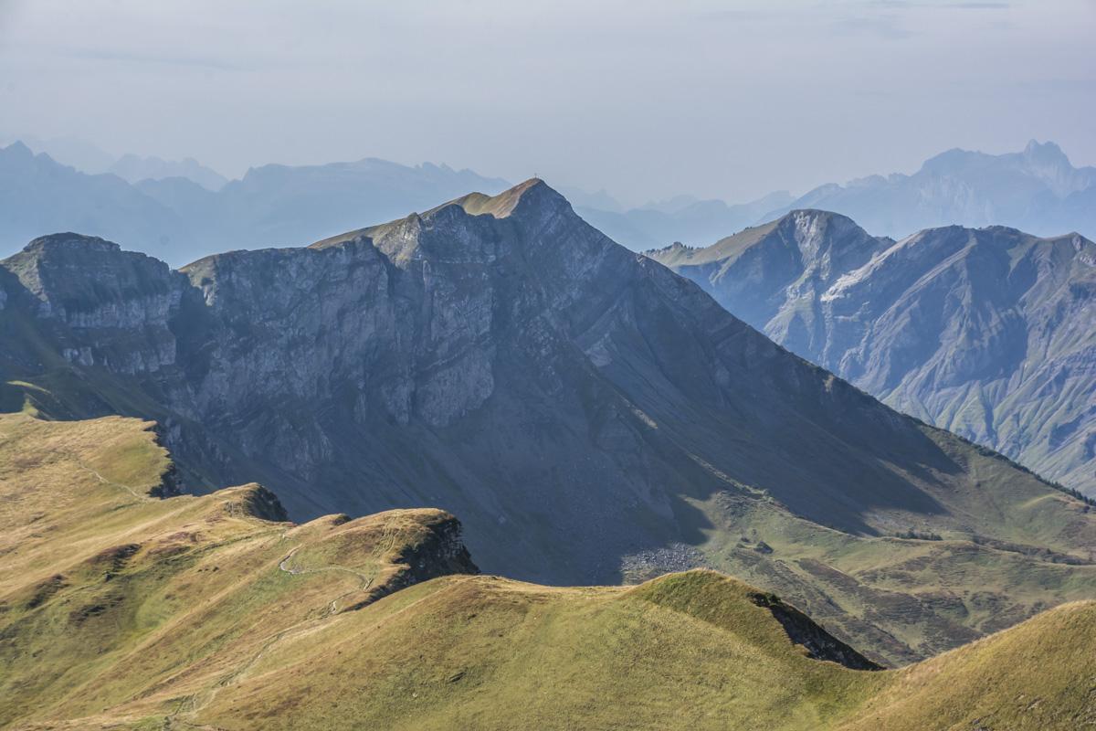 Heidelbeeren Berge
